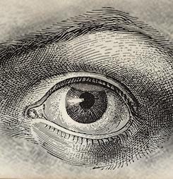 Mituri despre lentilele de contact pierdute în ochi